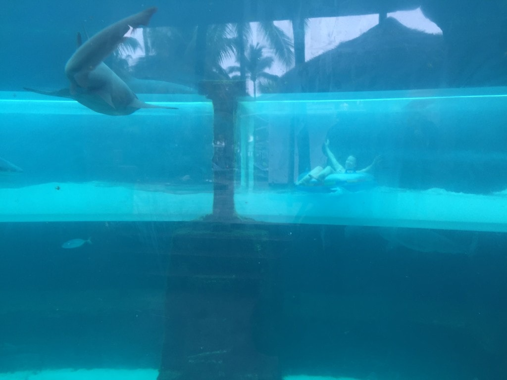 """Serpent Slide goes through the shark tank - """"The Secrets of Atlantis in the Bahamas"""" - Two Traveling Texans"""