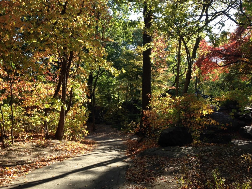 """The North Woods looks more like a wilderness hike than a park in the middle of NYC. - """"The Hidden Gems in Northern End of Central Park"""" - Two Traveling Texans"""
