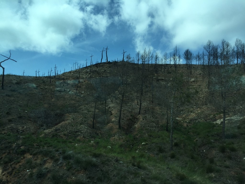 """The forest of crosses to raise awareness for forest fires. - """"Montserrat: Mountain, Monastery, and Wine"""" - Two Traveling Texans"""