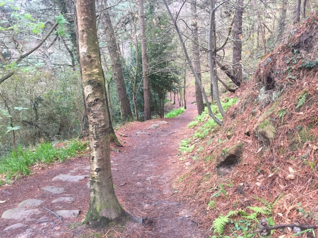 Some of the easier stretch of the trail.