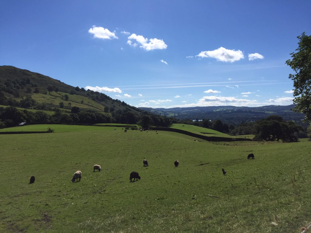 "Another lovely picture from our walk - ""An Introduction to England's Lake District"" - Two Traveling Texans"