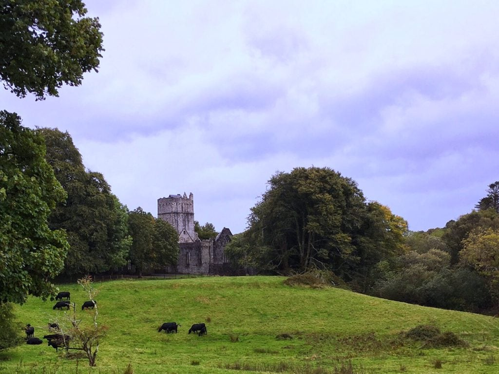 """You can see Muckross Abbey in the distance through the trees. - """"What to See When You Visit Killarney National Park"""" - Two Traveling Texans"""
