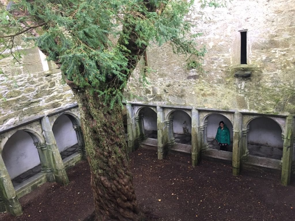 """Yes that is a tree inside the abbey. Can you spot Anisa? - """"What to See When You Visit Killarney National Park"""" - Two Traveling Texans"""