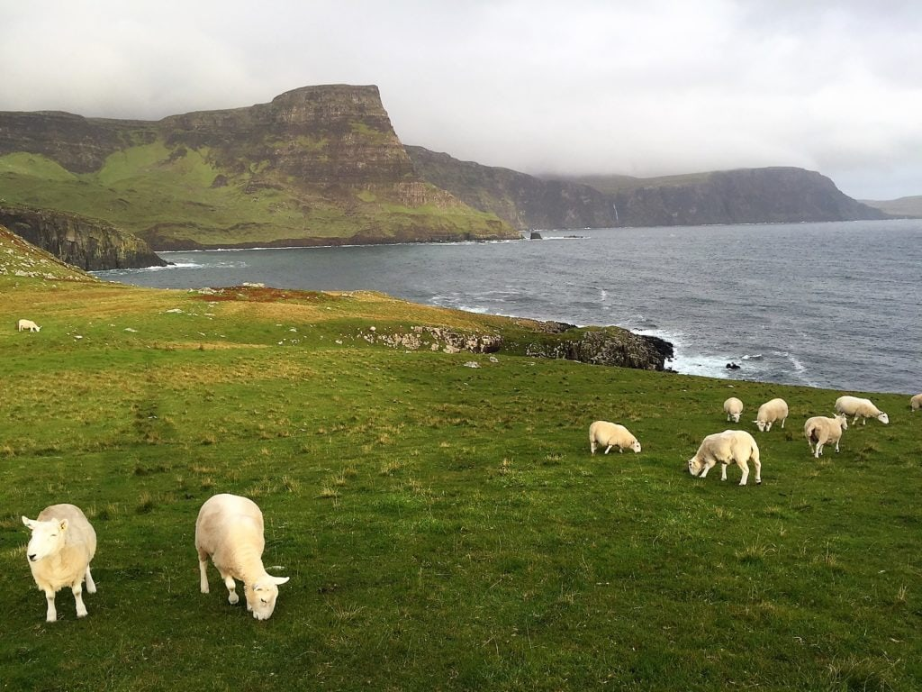 """The sheep make Neist Point even more special. - """"Neist Point Lighthouse: Best Sunset Spot on Isle of Skye?"""" - Two Traveling Texans"""