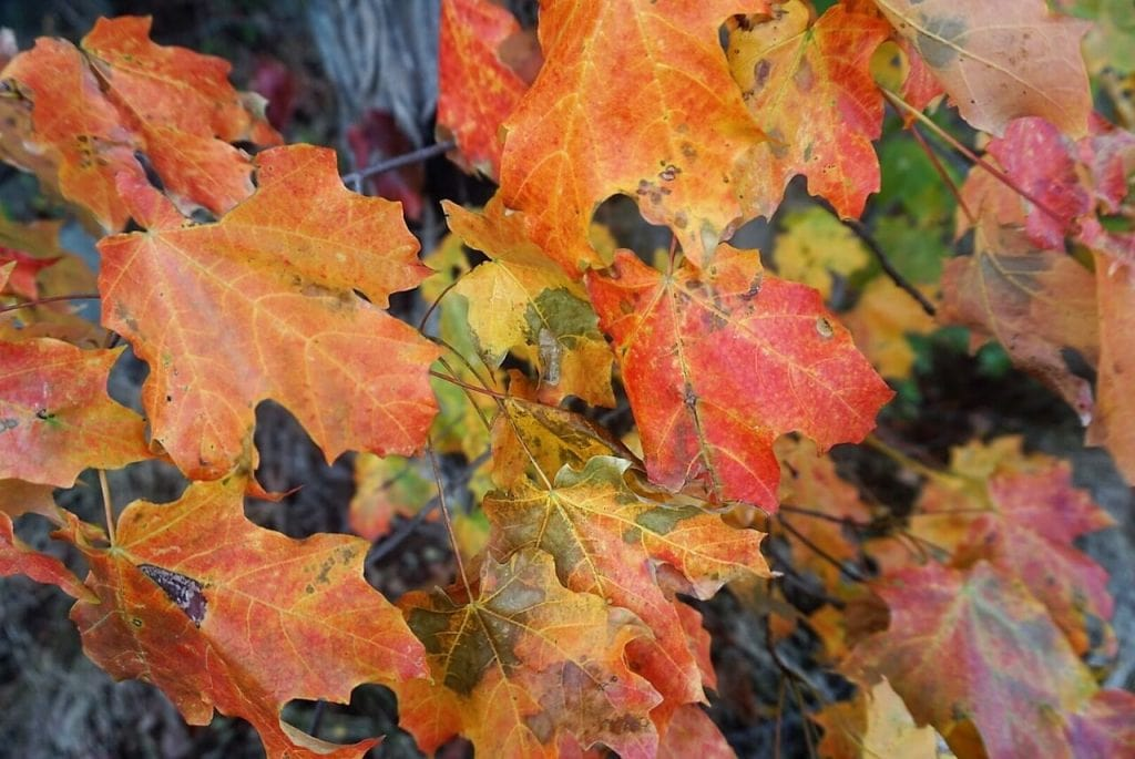 """The Fall colors are so pretty! - """"Palisades Interstate Park: Perfect For a Fall Hike"""" - Two Traveling Texans"""